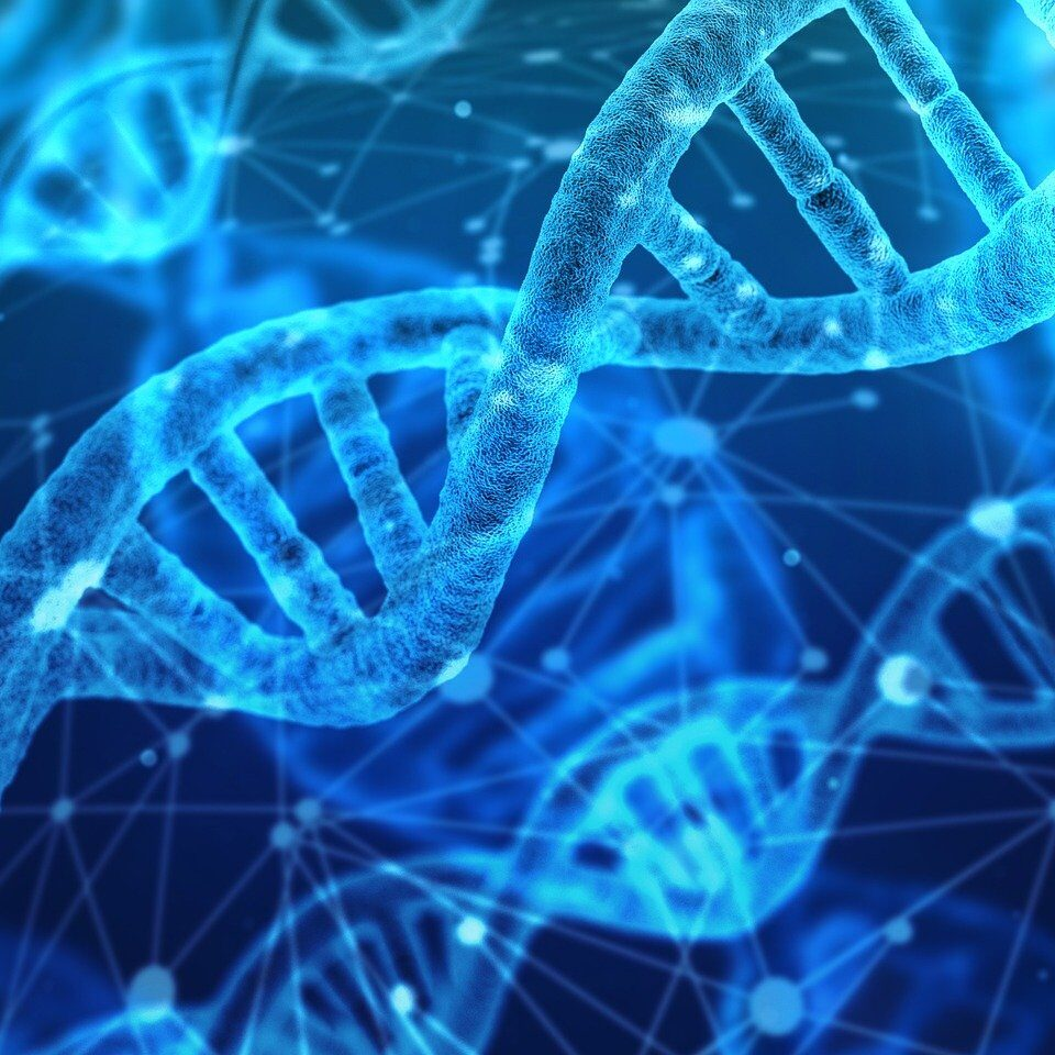 Tüm Genom Dizileme